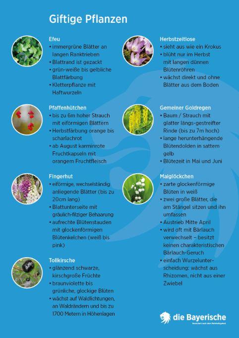 Diebayerische Ratgeber Giftige Pflanzen Info