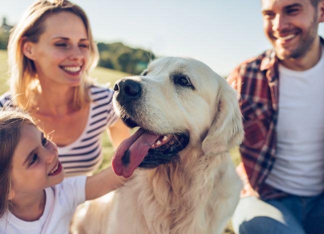 Diebayerische Ratgeber Versicherungen Tierhalter
