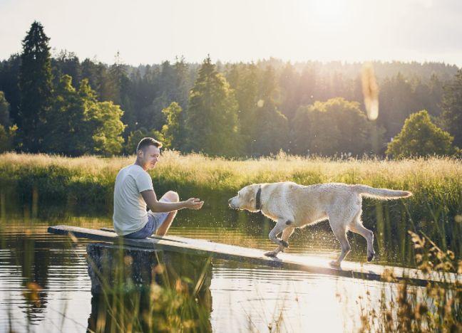 Diebayerische Ratgeber Urlaub Mit Hund