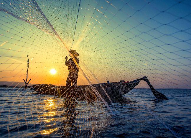 Diebayerische Ratgeber Nachhaltiger Fisch