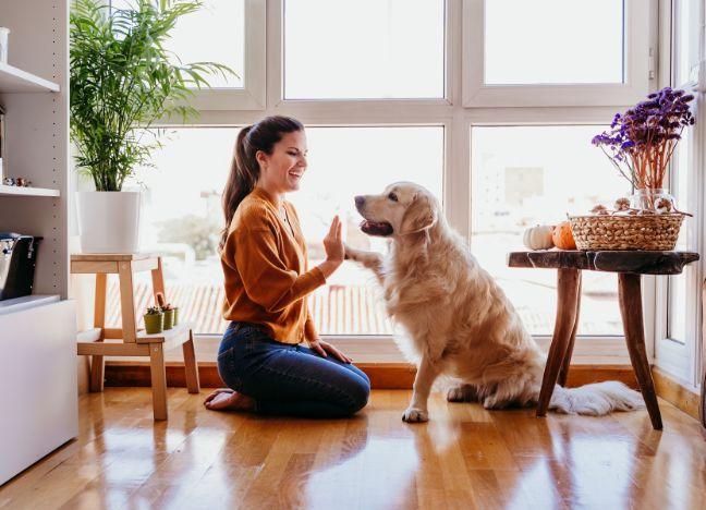 Die Bayerische - Hundekrankenversicherung