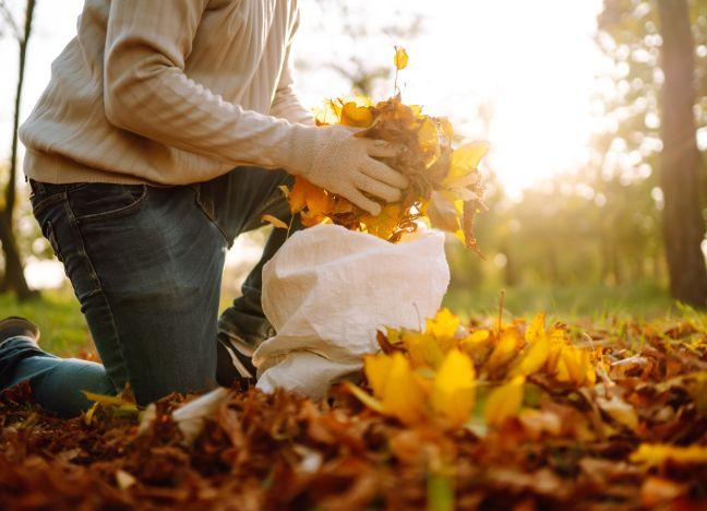 RegelungenLaub Fegen im Herbst